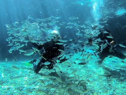Divers Delight
